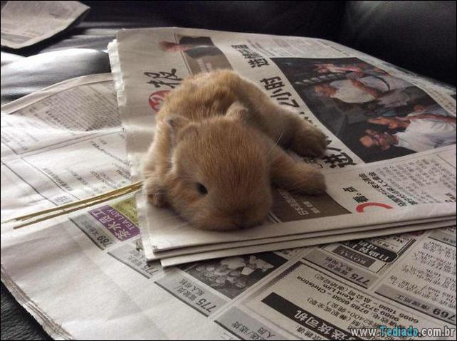 os-coelhos-mais-fofos-do-mundo-18