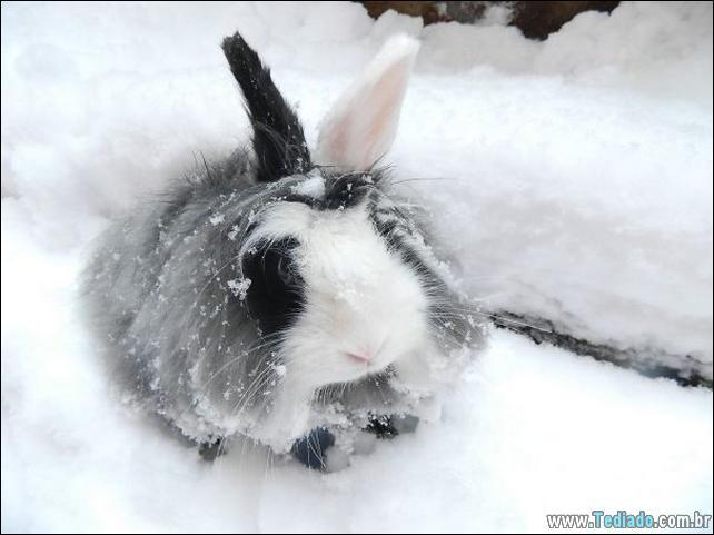 os-coelhos-mais-fofos-do-mundo-19