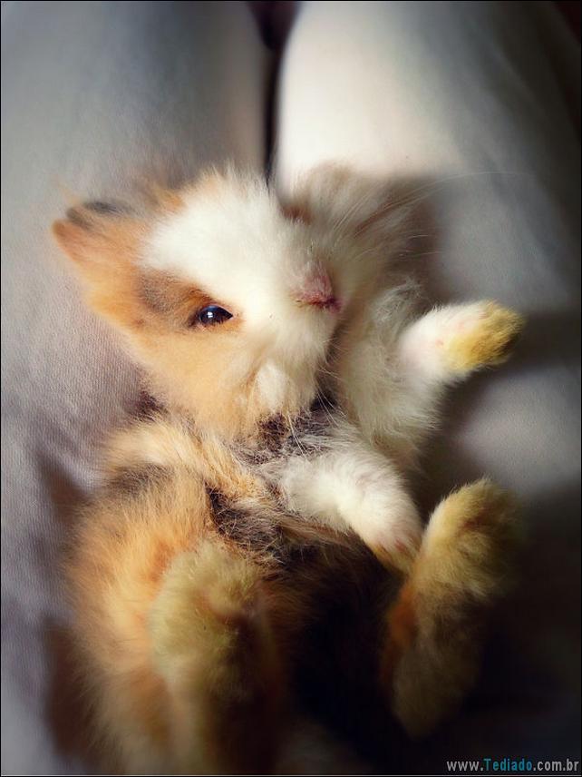 os-coelhos-mais-fofos-do-mundo-20