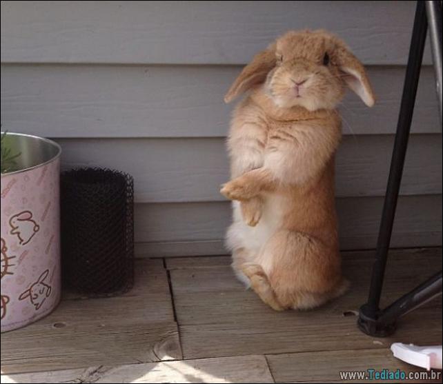 os-coelhos-mais-fofos-do-mundo-21
