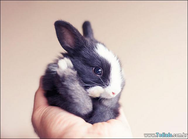 os-coelhos-mais-fofos-do-mundo-22