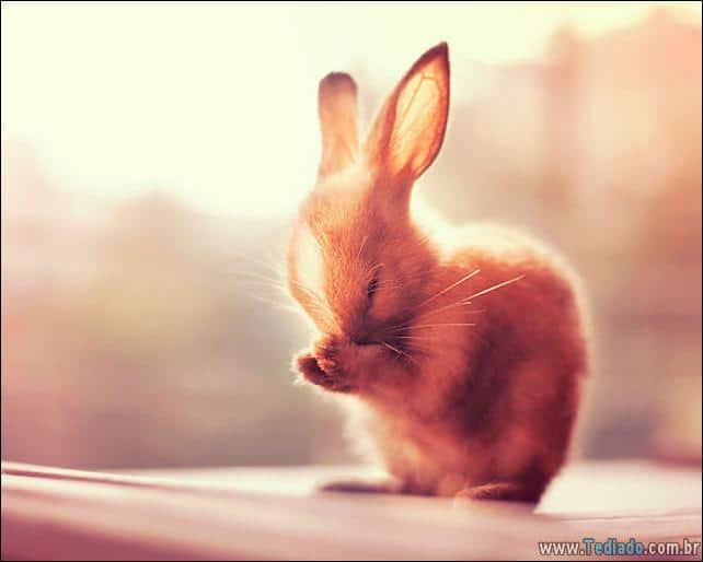 os-coelhos-mais-fofos-do-mundo-23