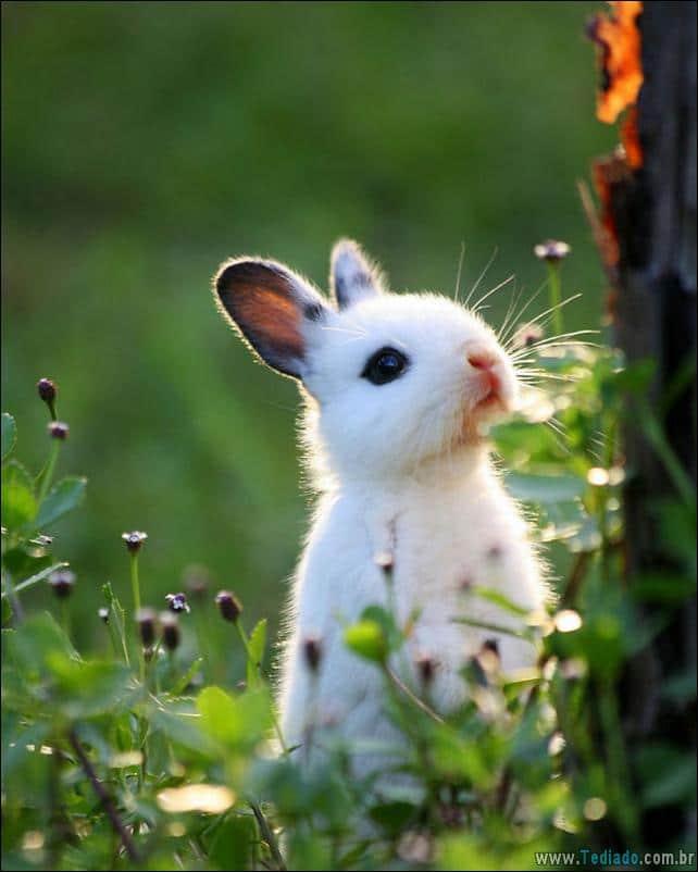 os-coelhos-mais-fofos-do-mundo-25