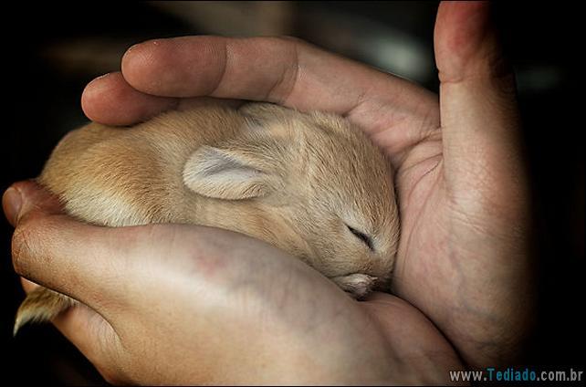 os-coelhos-mais-fofos-do-mundo-26