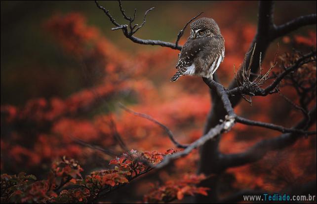 animais-que-aprecia-o-outono-magico-01