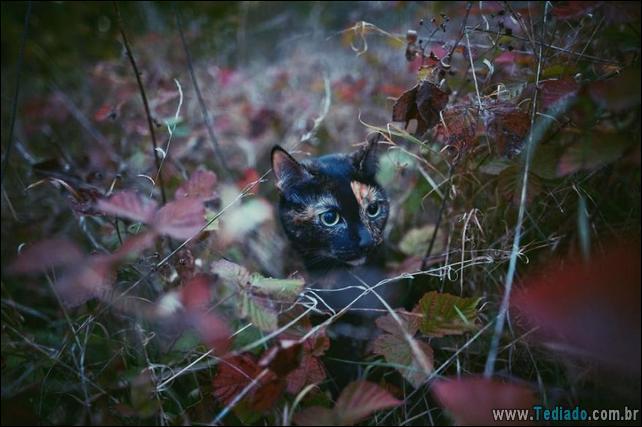 animais-que-aprecia-o-outono-magico-02