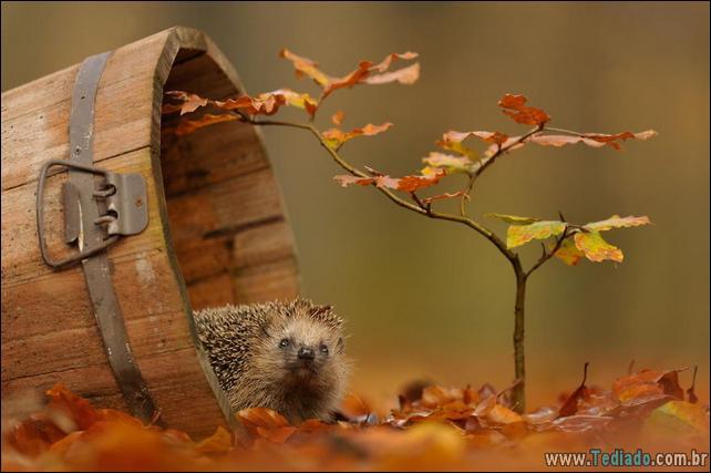animais-que-aprecia-o-outono-magico-03