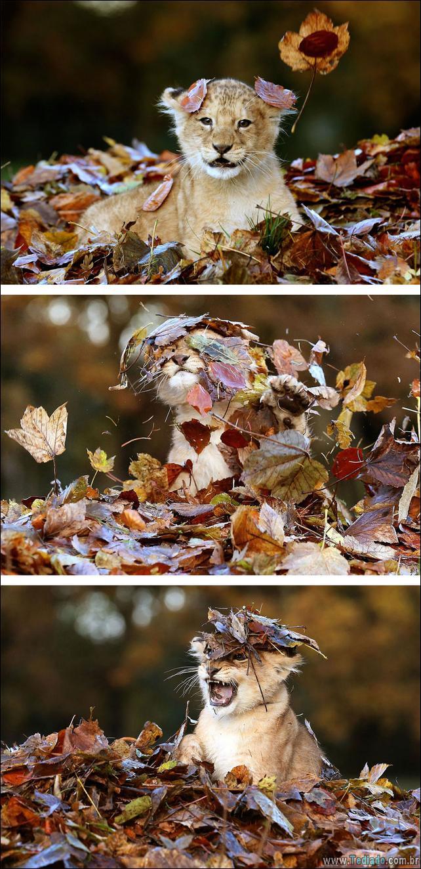 animais-que-aprecia-o-outono-magico-04
