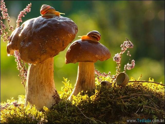 animais-que-aprecia-o-outono-magico-06