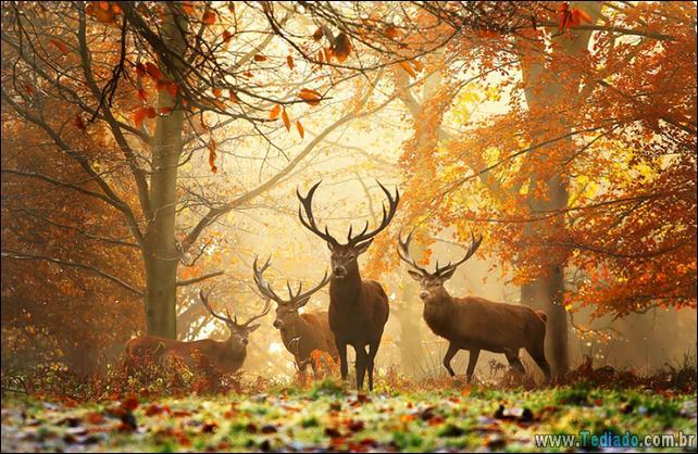 animais-que-aprecia-o-outono-magico-07