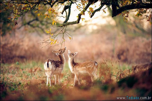 animais-que-aprecia-o-outono-magico-09
