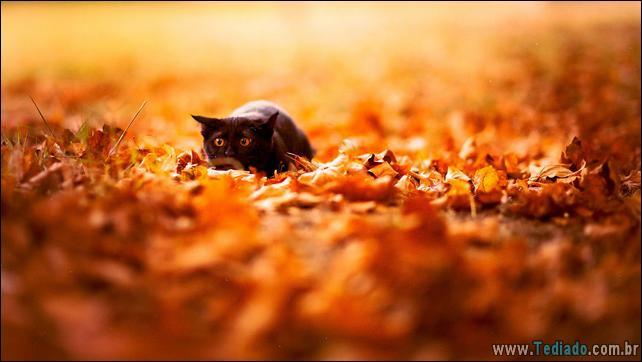 animais-que-aprecia-o-outono-magico-10