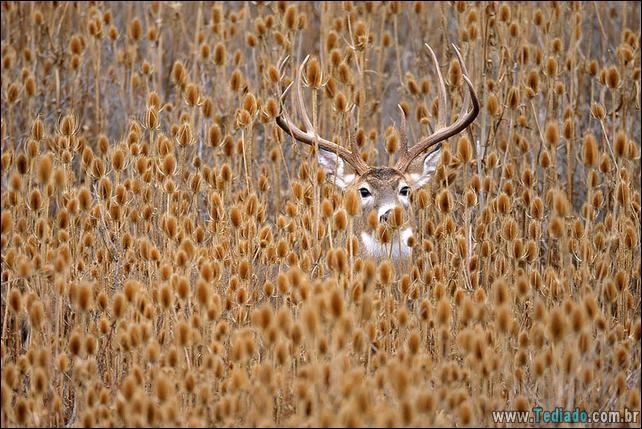 animais-que-aprecia-o-outono-magico-11