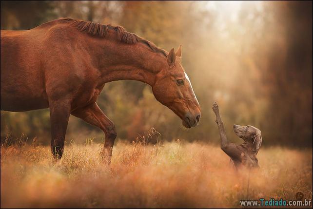 animais-que-aprecia-o-outono-magico-12