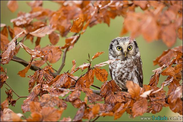animais-que-aprecia-o-outono-magico-13