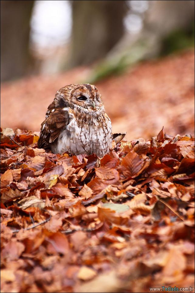 animais-que-aprecia-o-outono-magico-14
