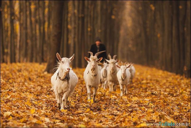 animais-que-aprecia-o-outono-magico-15
