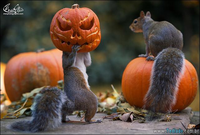 animais-que-aprecia-o-outono-magico-16