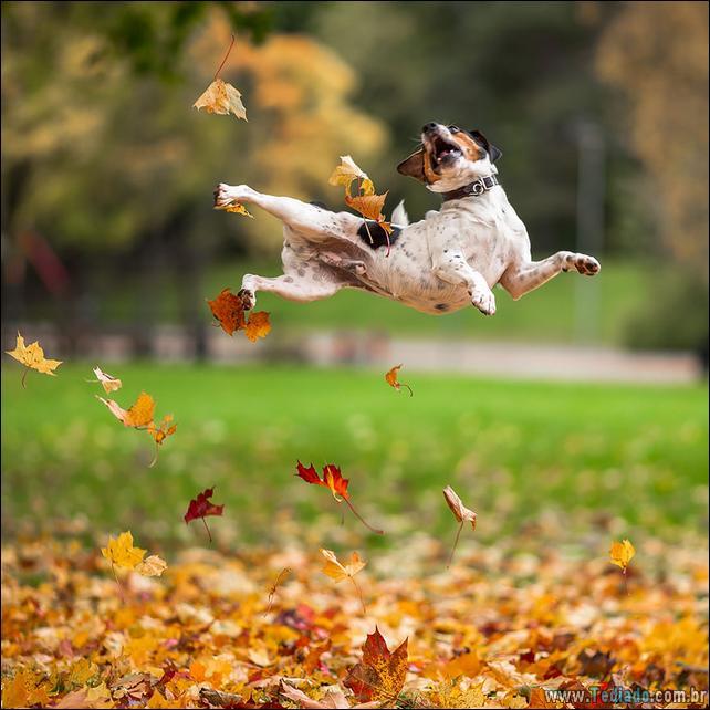animais-que-aprecia-o-outono-magico-18