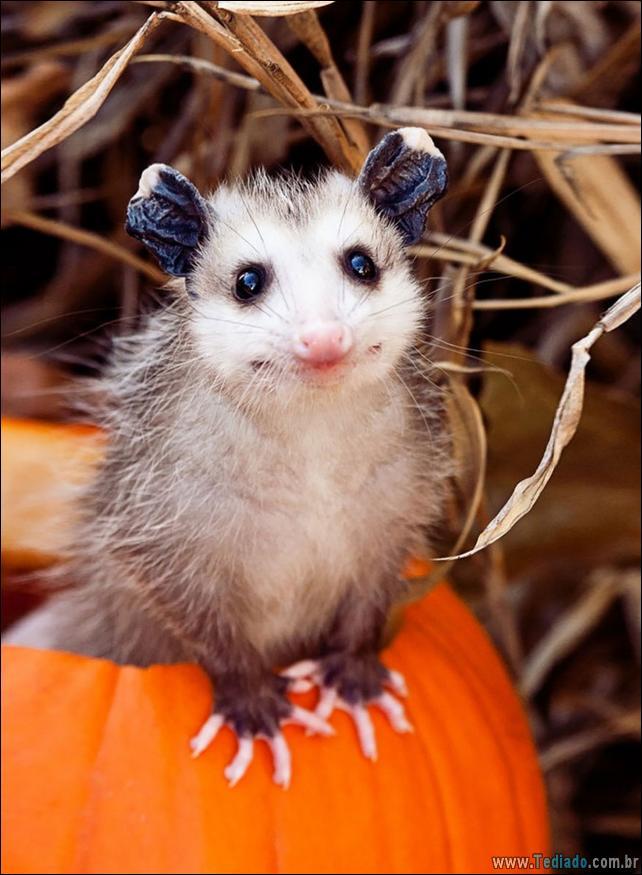 animais-que-aprecia-o-outono-magico-21