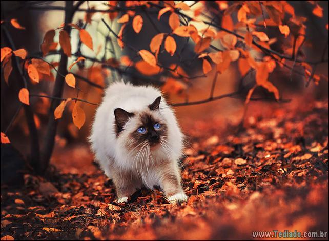 animais-que-aprecia-o-outono-magico-22