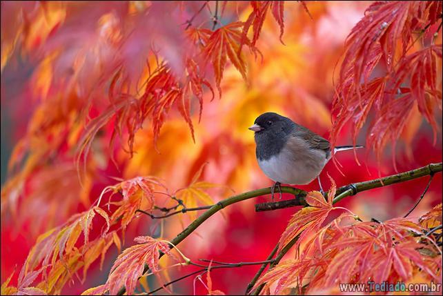 animais-que-aprecia-o-outono-magico-23