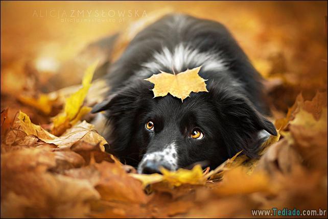 animais-que-aprecia-o-outono-magico-24