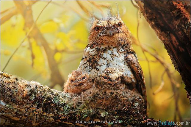 animais-que-aprecia-o-outono-magico-25