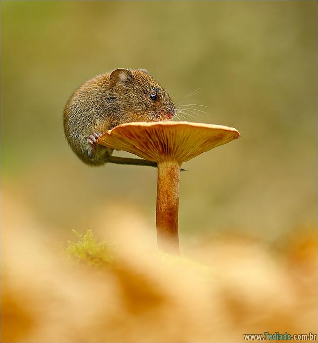 animais-que-aprecia-o-outono-magico-26