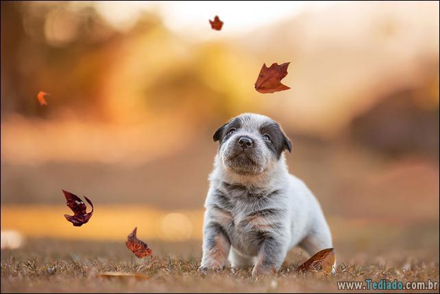 animais-que-aprecia-o-outono-magico-27