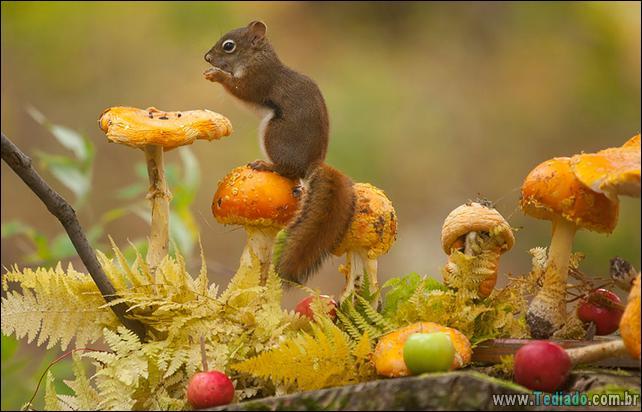 animais-que-aprecia-o-outono-magico-29