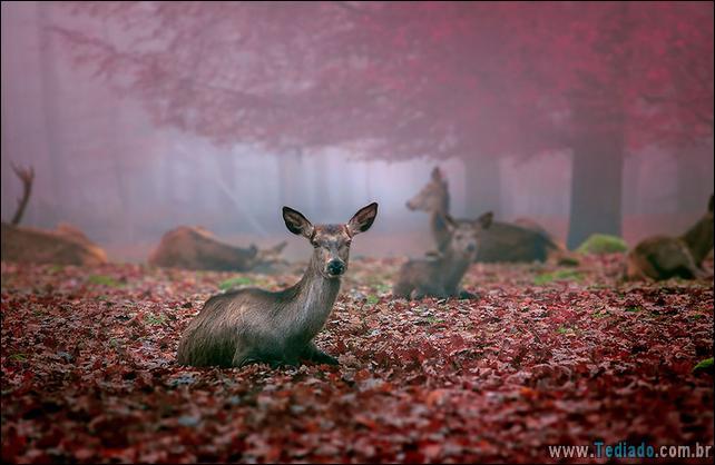 animais-que-aprecia-o-outono-magico-30
