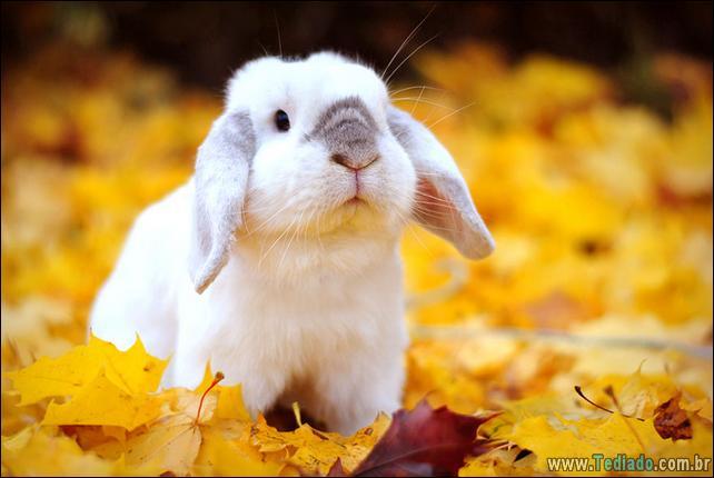 37 animais que aprecia o Outono Mágico 2