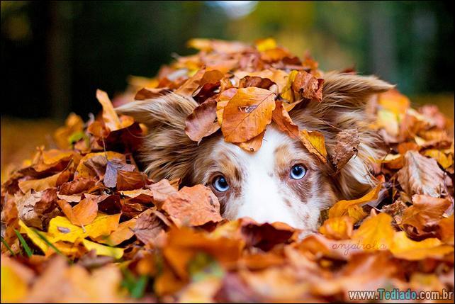 animais-que-aprecia-o-outono-magico-32