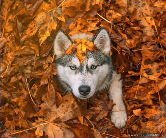 animais-que-aprecia-o-outono-magico-34