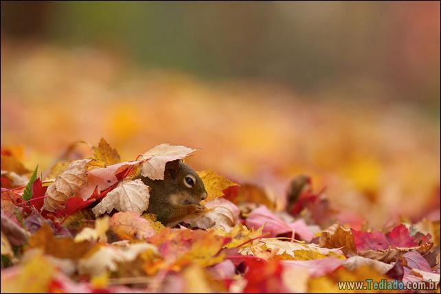 animais-que-aprecia-o-outono-magico-35