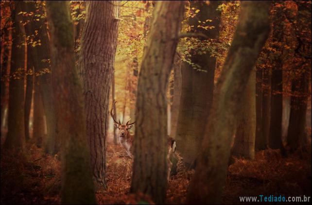 animais-que-aprecia-o-outono-magico-36
