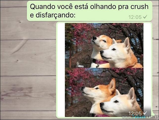 conversar-whatsapp-17