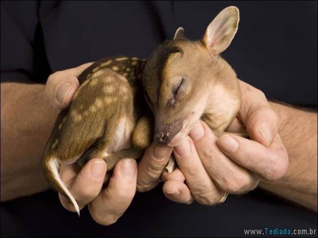 filhotes-de-animais-mais-bonitos-de-todos-os-tempos-12