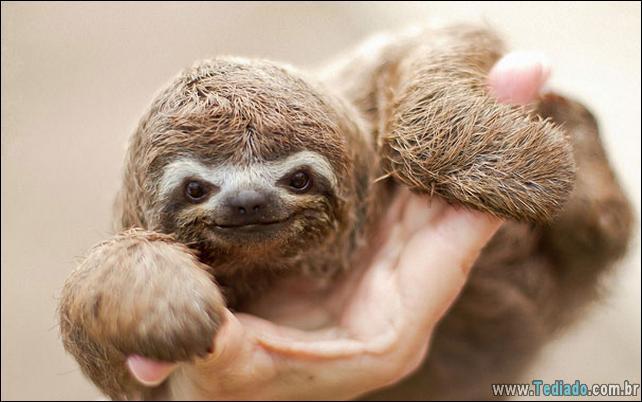 filhotes-de-animais-mais-bonitos-de-todos-os-tempos-18