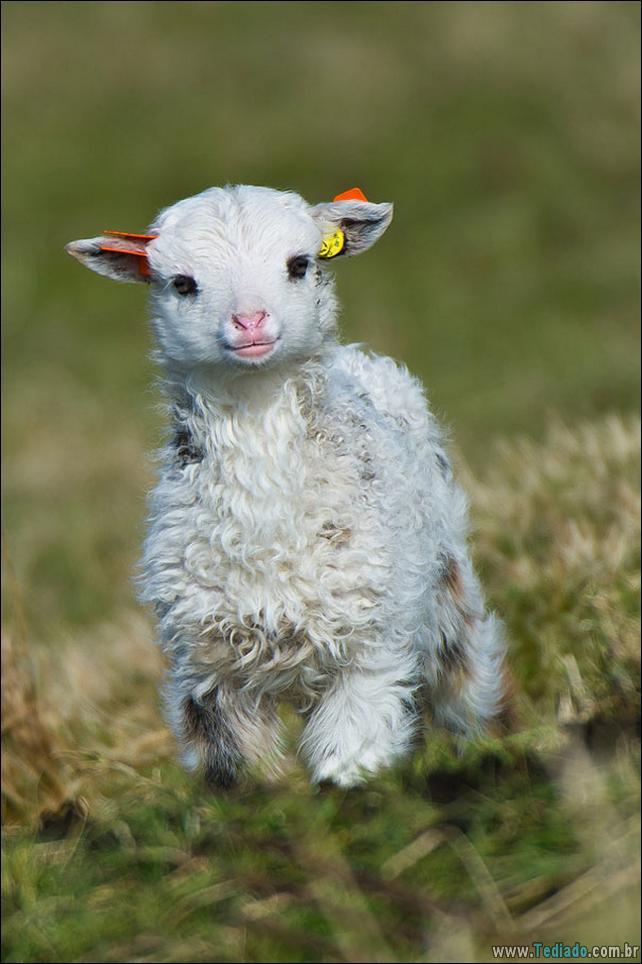 filhotes-de-animais-mais-bonitos-de-todos-os-tempos-19