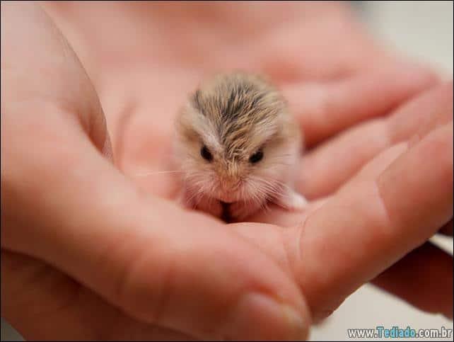 filhotes-de-animais-mais-bonitos-de-todos-os-tempos-31