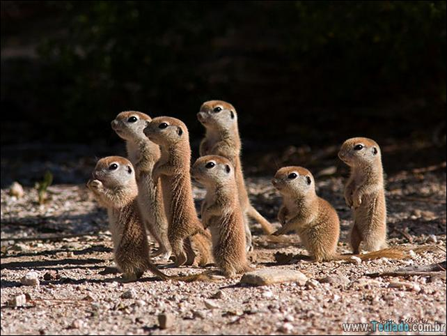 filhotes-de-animais-mais-bonitos-de-todos-os-tempos-32