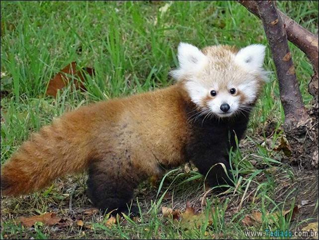 filhotes-de-animais-mais-bonitos-de-todos-os-tempos-46