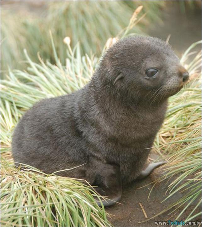 filhotes-de-animais-mais-bonitos-de-todos-os-tempos-50