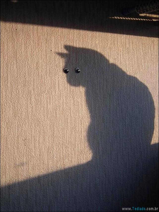 foto-de-gato-tirado-no-momento-certo-03