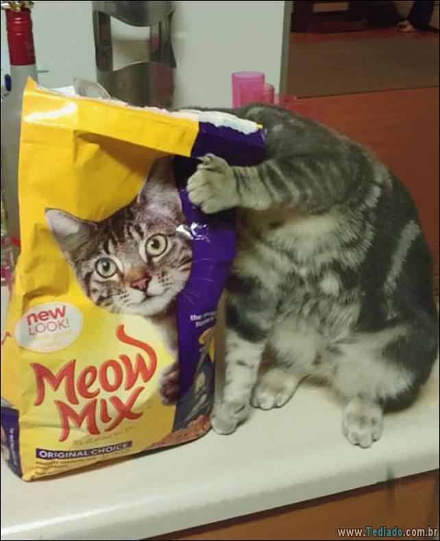 foto-de-gato-tirado-no-momento-certo-12
