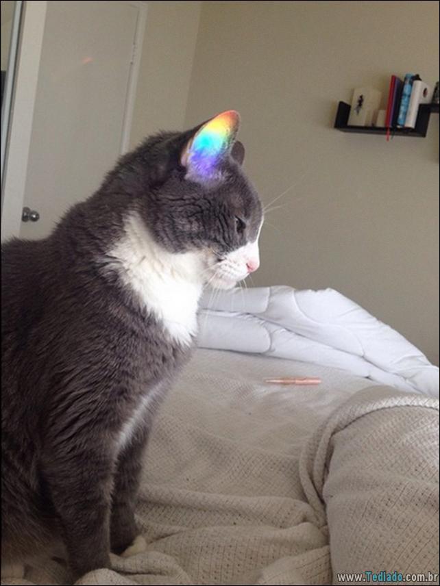 foto-de-gato-tirado-no-momento-certo-14