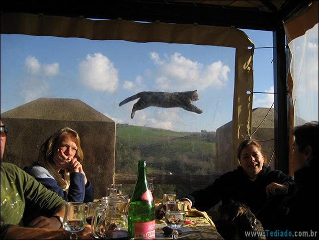 foto-de-gato-tirado-no-momento-certo-16