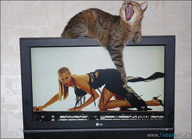 foto-de-gato-tirado-no-momento-certo-17